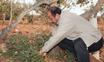 A farmer tends to his pistachio trees in Gaziantep, Turkey.
