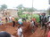 COHESODEC Promoting Community Development in Cameroon