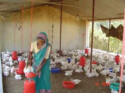 Image result for womens farmer in poultry farming