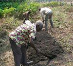 A community elder and cooperative member preparing community land for planting, http://www.sfcg.org/programmes/sbp/pdf/cabinda%20-%20success.pdf