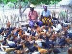 poultry farming is simple way of poverty reductio get involved